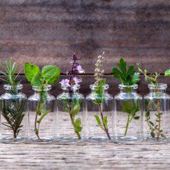 Acné, couperose, Herpès : découvrez les huiles essentielles pour les traiter naturellement